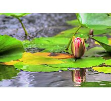 Late Bloomer Photographic Print