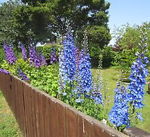 Delphiniums by OpenSecret