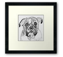 Shakespeare the Watch Dog Framed Print