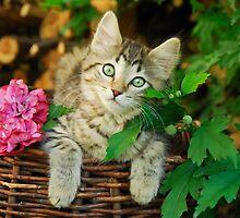 Cutie young kitten on a wicker basket  by Katho Menden