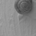 Gastropoda in Black & White by Mary-Elizabeth Kadlub