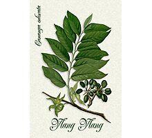 Botanical illustration of Ylang Ylang Photographic Print