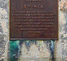 Boomer by Daniel Owens