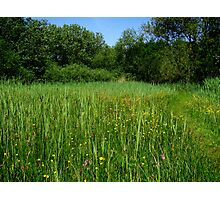 Wet grasslands  Photographic Print