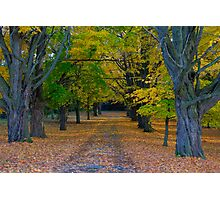 Fallen Leaves III Photographic Print