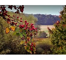 Hawthorn Photographic Print