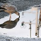154 - GULL REFLECTION AT AMBLE- 01 (D.E. 2013) by BLYTHPHOTO