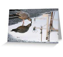 154 - GULL REFLECTION AT AMBLE- 01 (D.E. 2013) Greeting Card