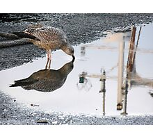 154 - GULL REFLECTION AT AMBLE- 01 (D.E. 2013) Photographic Print