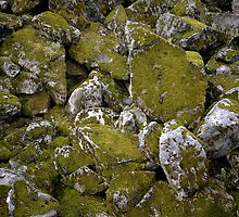 Mossy Rocks in Cascade Mountains, Washington State by Vern Treat
