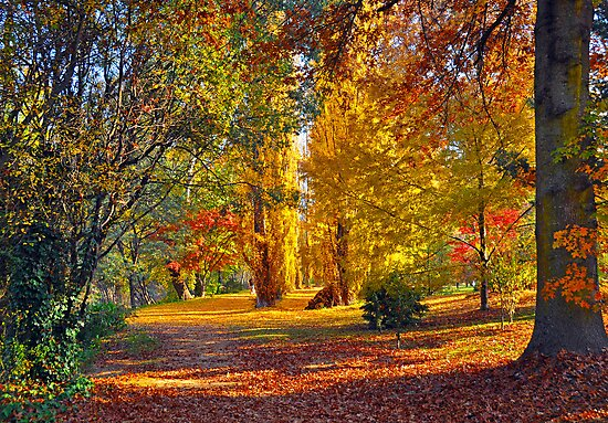 AUTUMN BRIGHT by Raoul Madden