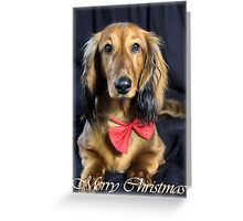 A very doxie Christmas 19 Greeting Card