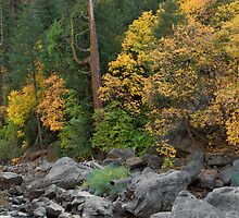 Yosemite Autumn by Floyd Hopper