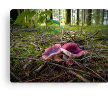 Russulas ~ Wild Mushrooms ~ Canvas Print