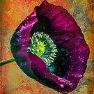 Poppy for your castle by alan shapiro