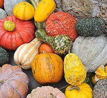 Pumpkin Harvest by svchristian