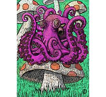 Octopus on Mushrooms Photographic Print