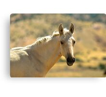 Freckled Foal Canvas Print