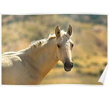 Freckled Foal Poster