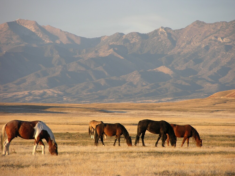 High Desert by Kelly Jay