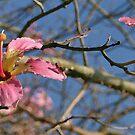 Picture of Autumn by Nira Dabush