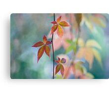Atumnal color surge Canvas Print