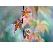 Atumnal color surge Photographic Print