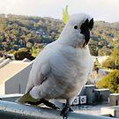 The Cockatoo by dozzam