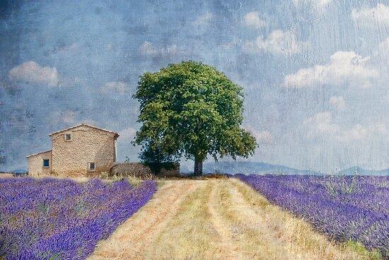belle journee by Jo-PinX