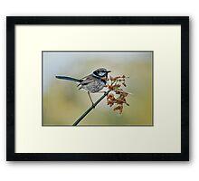 Fairy Wren - Laratinga Wetlands Framed Print