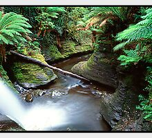 Sanctuary, Liffey Falls TAS by Chris Munn