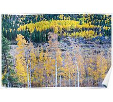 Rocky Mountain Autumn Contrast Poster