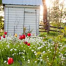 Flower Shed by Donell Trostrud