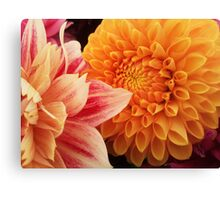 Flower macro - orange and pink Canvas Print