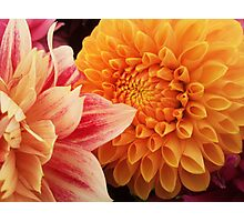 Flower macro - orange and pink Photographic Print
