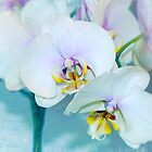 She dreams of Orchids by Amar-Images