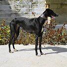 The Black Prince of Cordoba by Sue Ballyn
