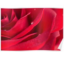 Water droplet on red rose Poster