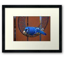 BlueJay @ the Feeder Framed Print