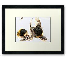 Bee crash disaster (2005)  Framed Print