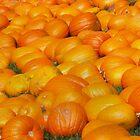 A whole lotta pumpkins by Eva Kato