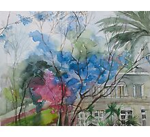 The Blue Trees Photographic Print