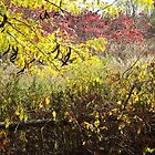 Autumn Colors, Liberty State Park, New Jersey  by lenspiro