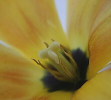 Inside The Tulip by edesigns14