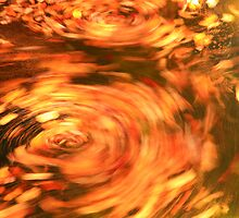 Fall Spin by Roupen  Baker