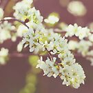 Flowering Tree by Libertad  Leal