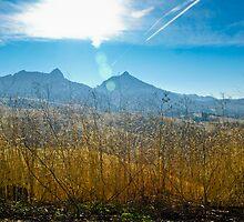 Golden Grain, Blue Sky by Denise Baker