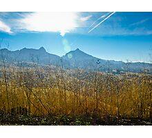 Golden Grain, Blue Sky Photographic Print