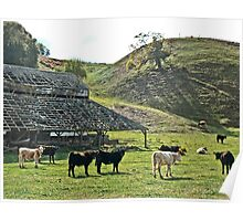 Old Barn Cows Poster