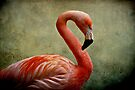 Flamingo by AD-DESIGN